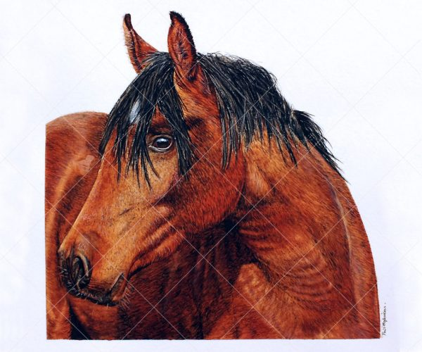 A horse painted in realistic watercolour by Paul Hopkinson
