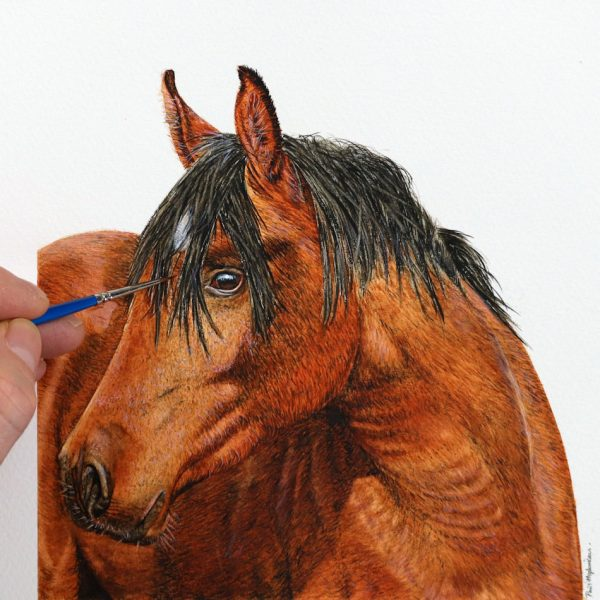Paul Hopkinson painting a horse portrait in watercolour