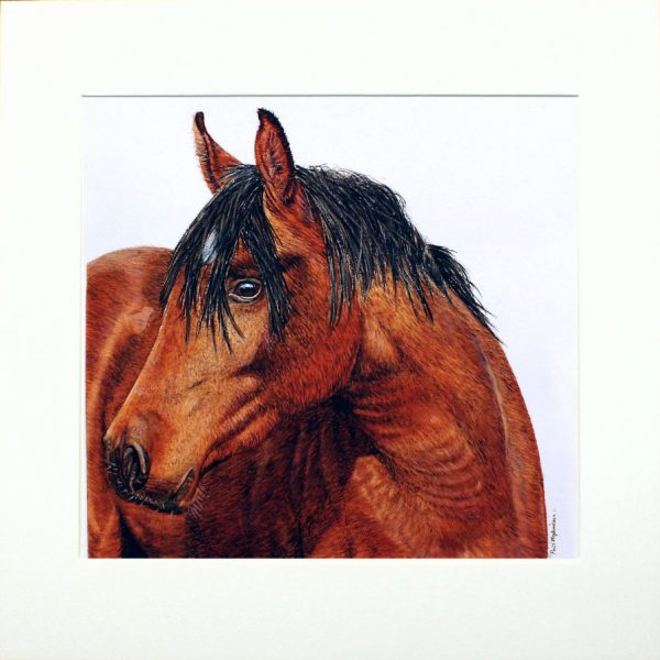 Paul Hopkinson wildlife artist & online art tutor, watercolour horse painting