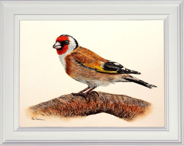 Goldfinch watercolour painting shown framed