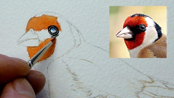How to paint a popular garden bird watercolour illustration, step 1