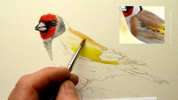 How to paint a popular garden bird watercolour illustration, step 2