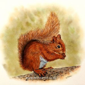 Original watercolour painting of a red squirrel, by Paul Hopkinson