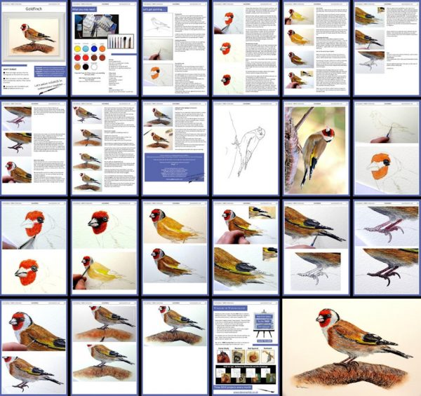 Overview image of a goldfinch watercolour painting lesson