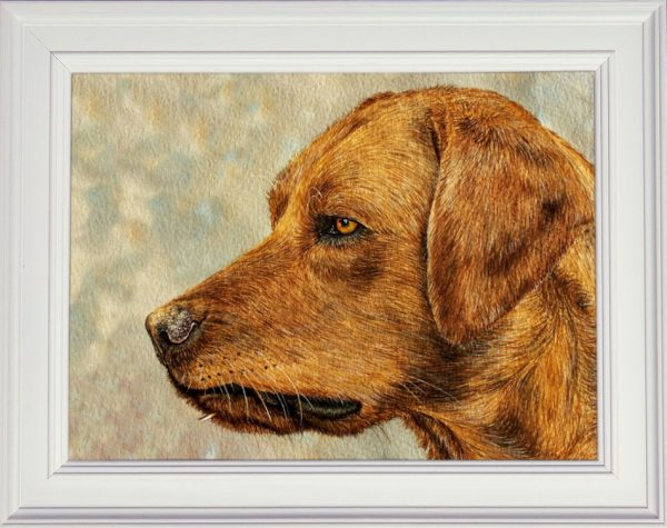 Red Fox Labrador watercolour painting shown framed