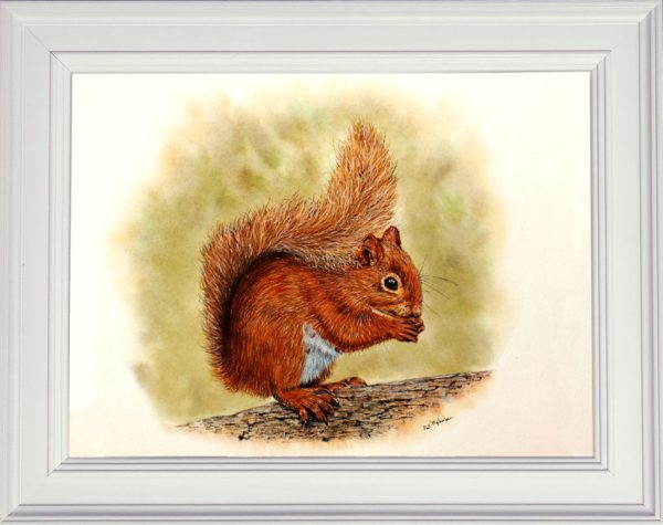 Red squirrel watercolour painting displayed in a white frame