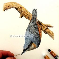Painting a nuthatch in watercolour