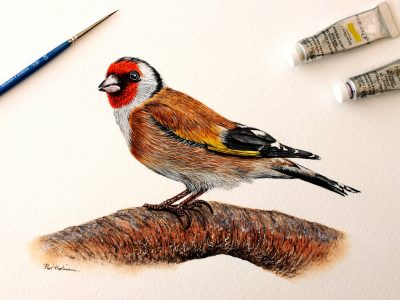 Original watercolour painting of a goldfinch