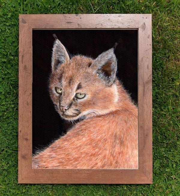 Framed watercolor lynx illustration by Paul Hopkinson