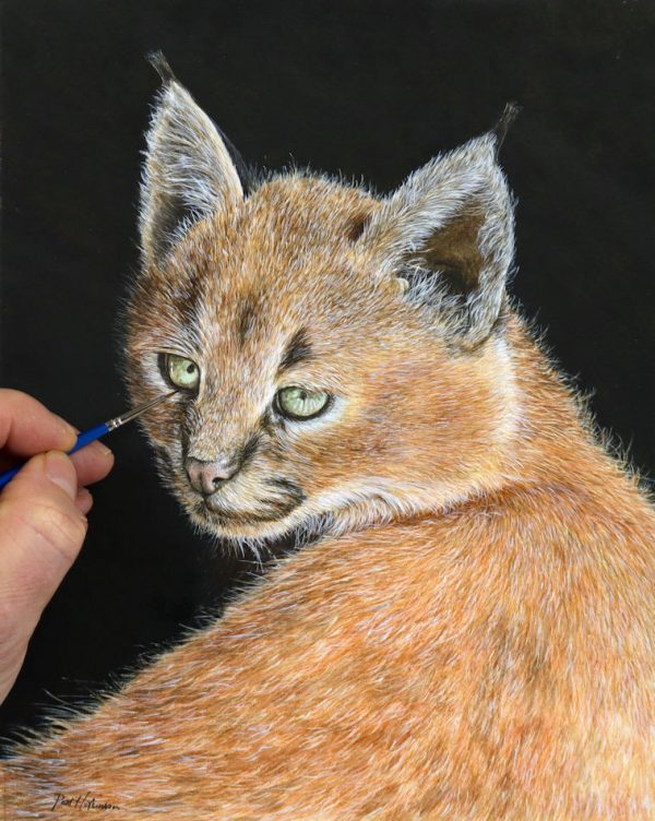 Paul Hopkinson painting a realistic lynx kitten in watercolour