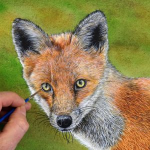 Paul Hopkinson painting a realistic watercolour fox cub
