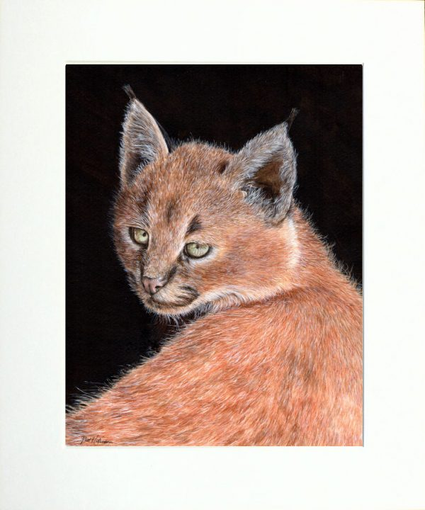 Paul Hopkinson wildlife artist and online art tutor, caracal painting