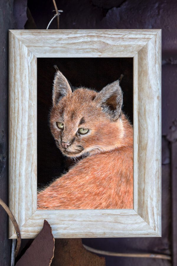 Watercolour lynx painting by artist Paul Hopkinson, shown in a rustic frame
