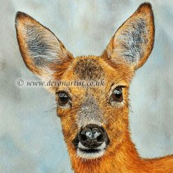 Original watercolour painting of a roe deer by Paul Hopkinson