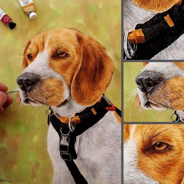 Beagle painted in watercolor by Paul Hopkinson, fine art detail
