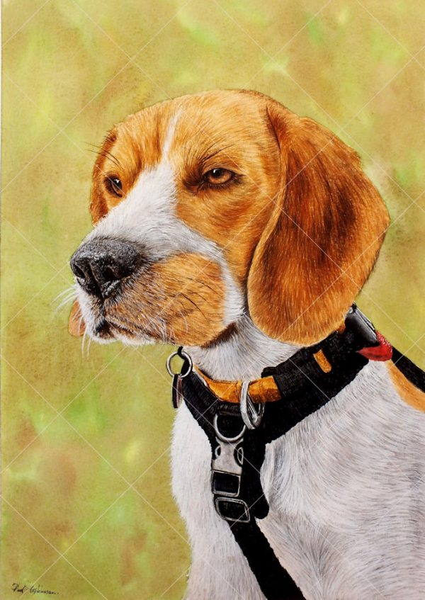 Beagle puppy painted in realistic watercolour by Paul Hopkinson