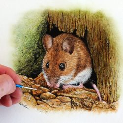 Watercolour painting of a wood mouse by Paul Hopkinson