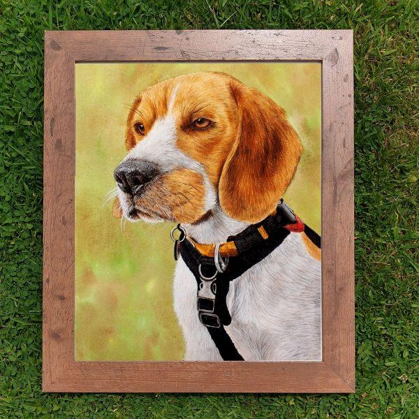 Framed watercolor beagle illustration by Paul Hopkinson