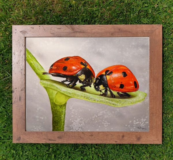 Framed watercolor ladybug illustration by Paul Hopkinson