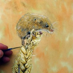 Watercolour painting of a harvest mouse by Paul Hopkinson