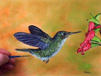 Watercolour painting of a hummingbird by Paul Hopkinson