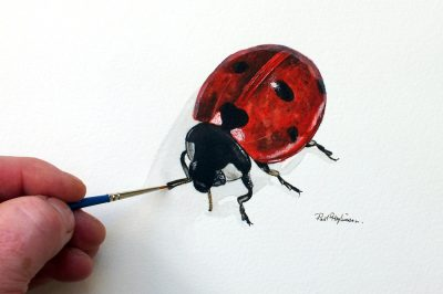 Watercolour painting of a ladybird by Paul Hopkinson