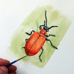 Watercolour painting of a lily beetle by Paul Hopkinson