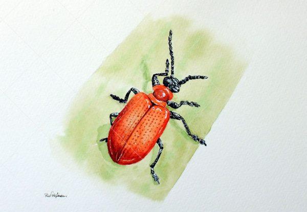 Original watercolor insect illustration