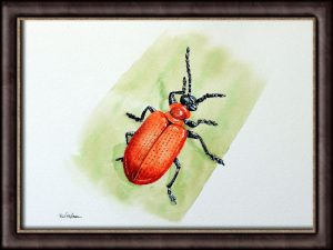 Original Watercolour Insect Illustration - Scarlet Lily Beetle