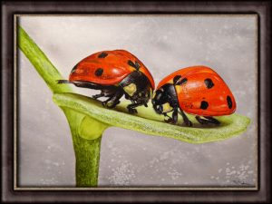 Ladybird Original Watercolour Painting - Illustration Style Fine Art
