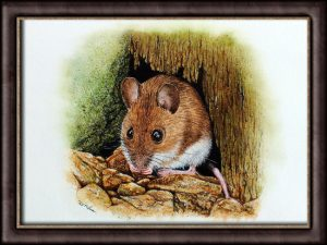 Original Watercolour Nature Painting - Wood Mouse Fine Art Illustration