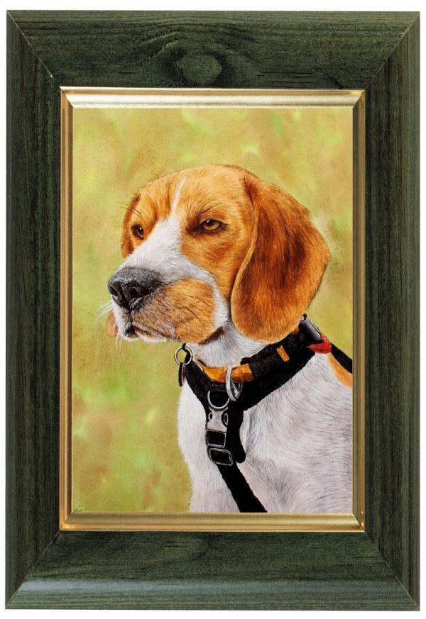 Original watercolour beagle dog painting by Paul Hopkinson