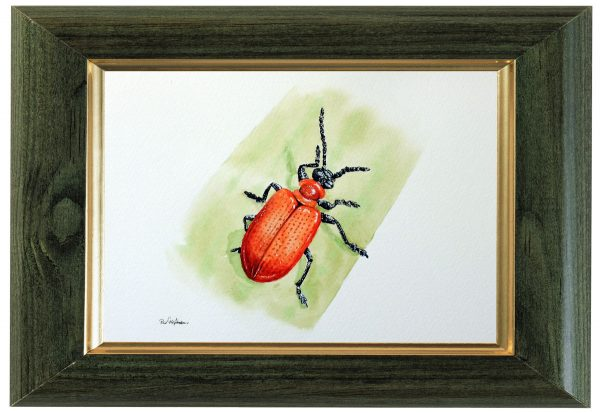Original watercolour beetle painting by Paul Hopkinson
