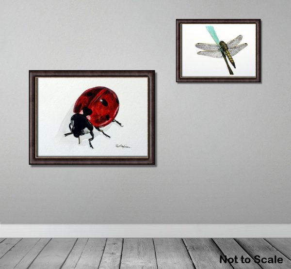 Original watercolour insect illustrations displayed framed