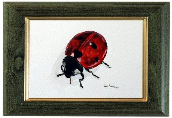 Original watercolour ladybird painting by Paul Hopkinson, displayed framed