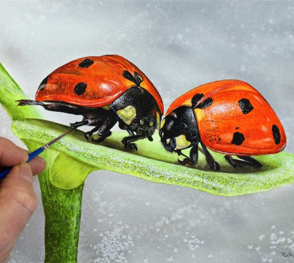 Paul Hopkinson painting ladybirds in watercolour