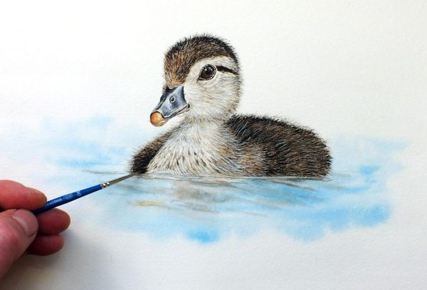 Paul Hopkinson painting a wood duckling in watercolor