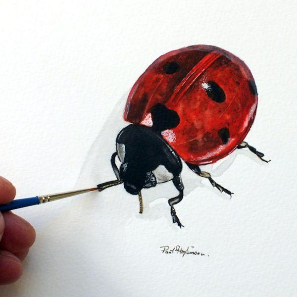 Paul Hopkinson painting ladybird watercolour illustration