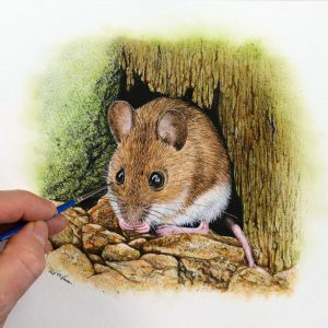 Paul Hopkinson painting an original watercolor wildlife artwork