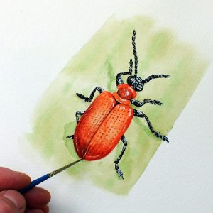 Paul Hopkinson painting an original watercolour insect illustration