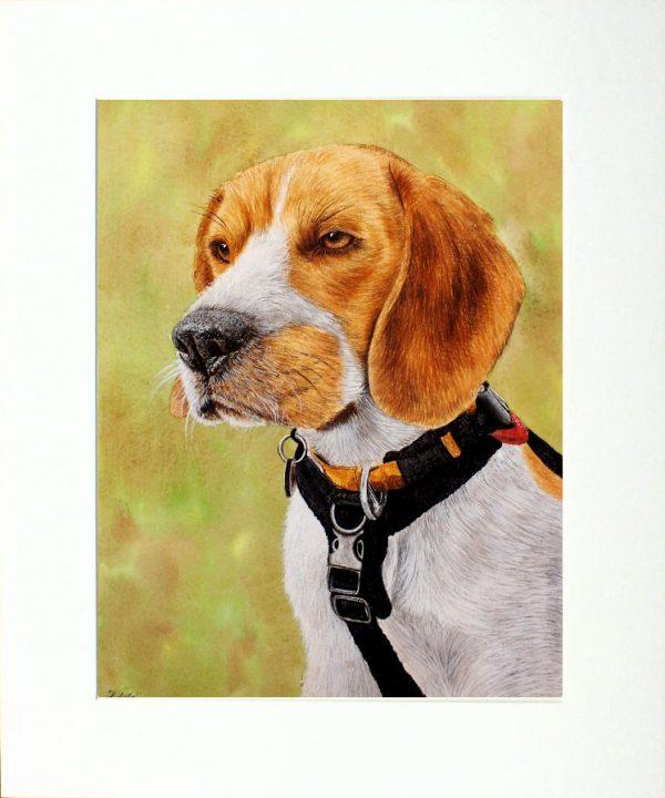 Paul Hopkinson wildlife artist, beagle dog watercolor painting