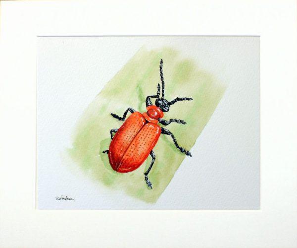 Paul Hopkinson, wildlife artist, beetle illustration
