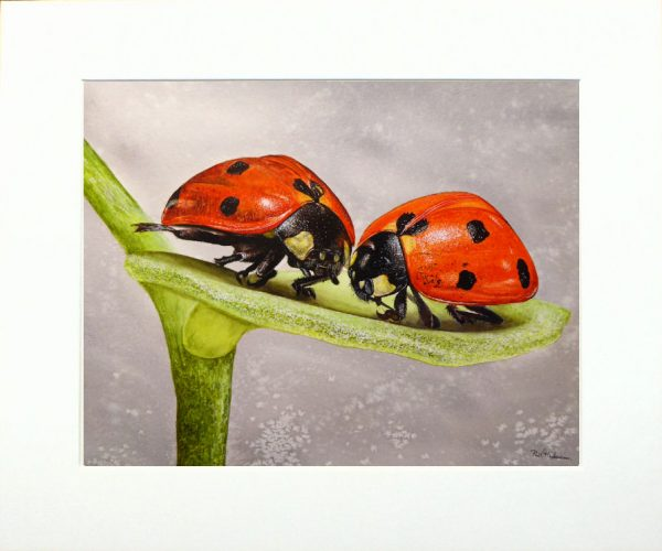 Paul Hopkinson wildlife artist and online art tutor watercolour ladybird painting