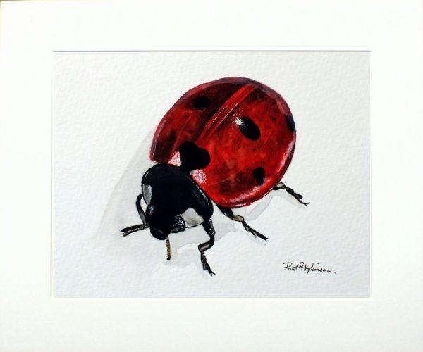 Paul Hopkinson wildlife artist, watercolour ladybird painting