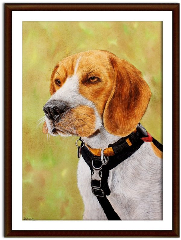 Watercolor beagle dog painting by Paul Hopkinson shown framed