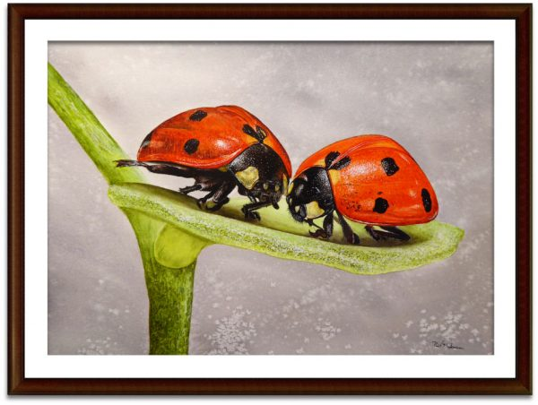 Watercolor ladybug painting by Paul Hopkinson, shown framed