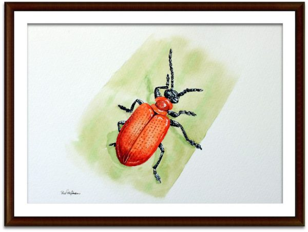 Watercolor lily beetle painting by Paul Hopkinson