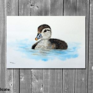 Watercolor painting of a Carolina Duckling by Paul Hopkinson on wood panelling