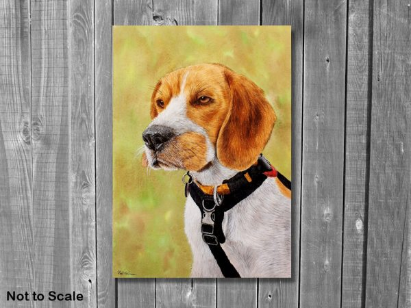 Watercolor wildlife artist Paul Hopkinson beagle portrait displayed