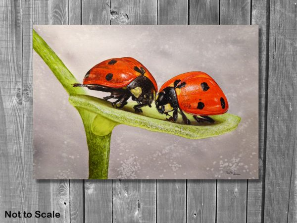 Watercolor wildlife artist Paul Hopkinson, ladybug painting displayed on a wall